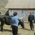 Luksemburg: Okoncana martovska humanitarna akcija – Kupljena krava za porodicu Čarković (foto)