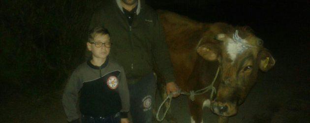 Luksemburg: U rekordnom roku okončana martovska akcija – Predata krava porodici Nebiovski