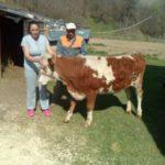 Luksemburg: Okončana februarska akcija: Steona junica predata porodici Omerović