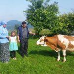 Luksemburg/Bosna: Okončana druga junska akcija – Predata krava porodici Osmanović