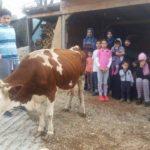 Luksemburg/Bosna: Okončana oktobarska akcija – Dodijeljena krava porodici Kozlić