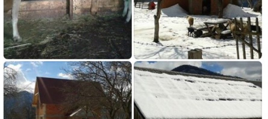 Luksemburg: Martovska humanitarna akcija – pomozimo 9-očlanu porodicu Čarković