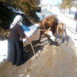 Luksemburg/Sandžak: Okončana septembarska akcija – Steona krava i tele predati porodici Dautović