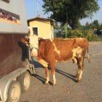 Luksemburg/Makedonija: Okončana julska akcija – Predata krava porodici Đurđević