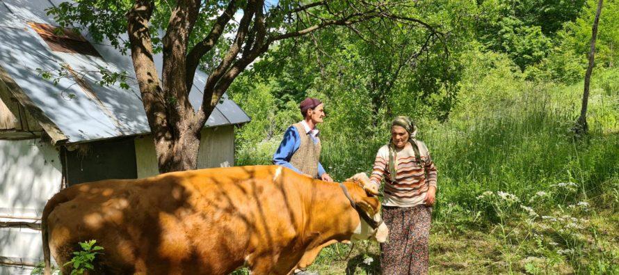 Luksemburg/Sandžak/Kosovo: Dodijeljene dvije krave u maju – Obradovane porodice Hodžić i Šabotić