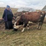 Luksemburg/Sandžak: Okončana decembarska akcija – Predata krava porodici Destović